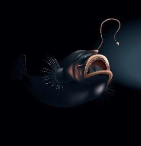 Angler_Fish_Illustration_400