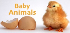 Baby animals pic