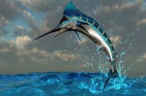 Blue_Marlin_Splash_400