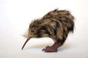 Kiwi_Bird_400