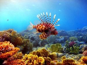 Lionfish Facts