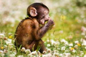 Infant Macaque Facts