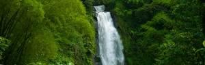 Rainforest_Biome