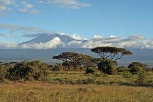 Savanna Biome Landscape