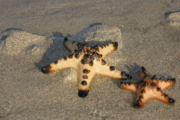 The Dividing Starfish  YouTube