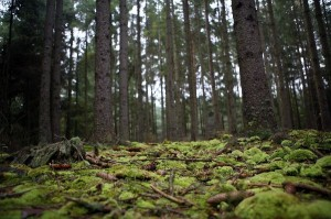 Temperate Deciduous Forest Information