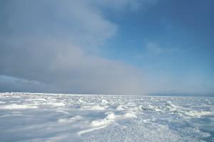 Tundra Biome Characteristics