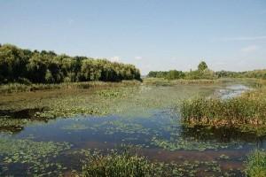 Wetland_Biome_2_400