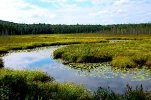 Wetland Biome Information