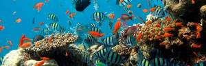 coral_reef_biome