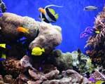 reef_biome