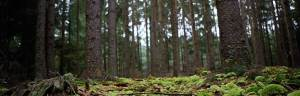 temperate_forest