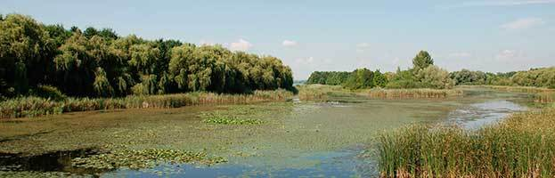 Wetland Biome