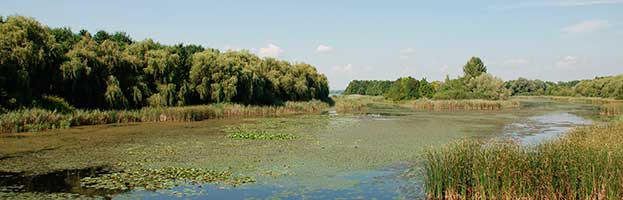 bio 20 biomes wetlands This ecology--biomes lesson plan is suitable for 5th  20 views 98 downloads resource details  biomes : wetlands.