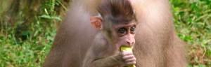 Drill_Monkey_baby