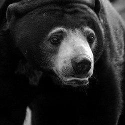Extinct Bear Species