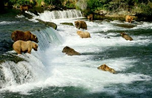 Grizzly Bears Information