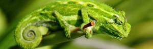 Lizard_habitat