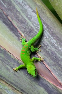Gecko Information