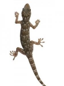 Types of Lizards