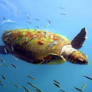 Sea Turtles Feeding