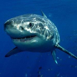 Shark Reproduction