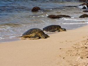 Sea Turtle Characteristics