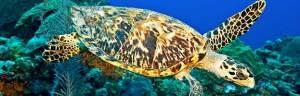 sea_turtle_anatomy