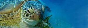 sea_turtle_feeding
