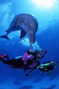 Human-dolphin communication