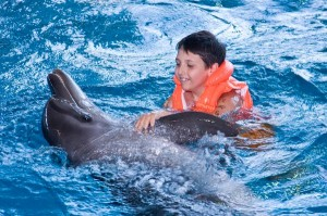 Dolphin and Humans Facts