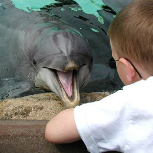 Dolphins and Humans picture