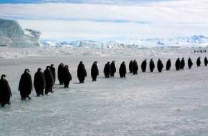 Penguin Behavior Facts