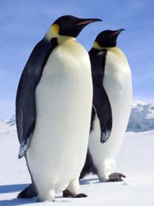 Two Penguin in Antarctica