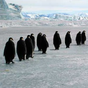 penguin habitat picture