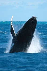Whale information picture
