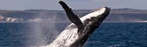 Whale_Habitat