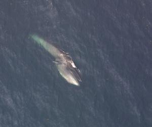 sei whale facts