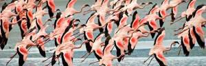 Flamingos_minisite