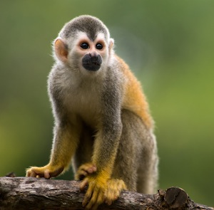 Types of monkey_picture