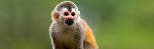Monkey Species