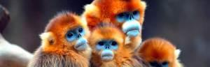 monkeys_minisite