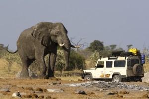 4x4 car near a big African Elephant in Botswana.