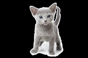 Feline_picture