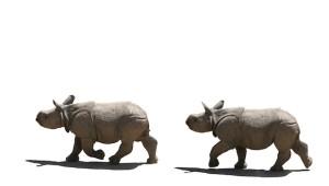 rhino family isolated