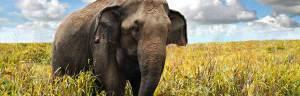 elephant_anatomy