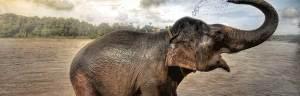 elephant_behavior