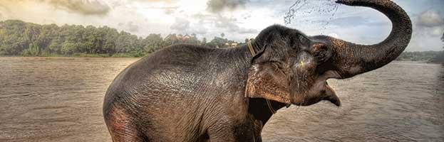 Elephant Behavior