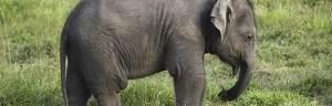 elephant_feeding