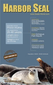 harbor-seal-infographic